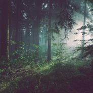 The Word for World is Forest: Writers Rebel Workshop
